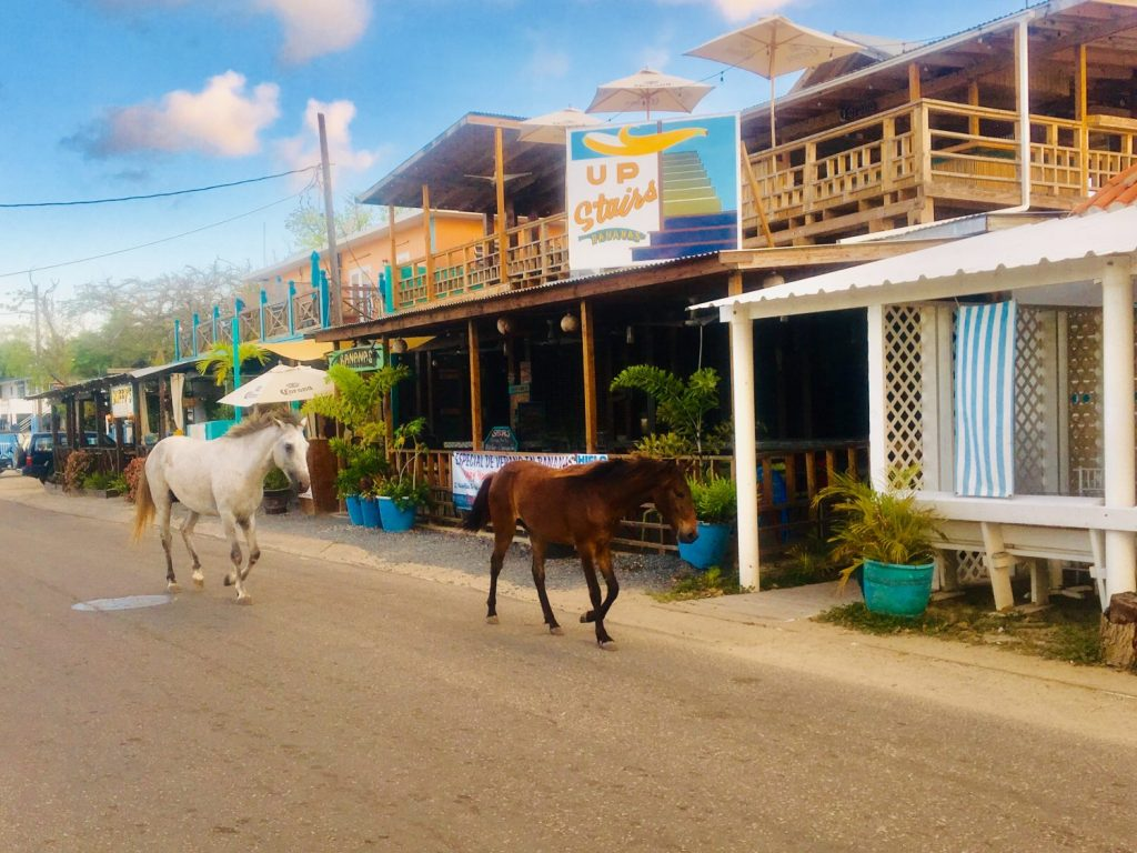 Watch these two horses trotting down the Malecón during your exotic beach vacation