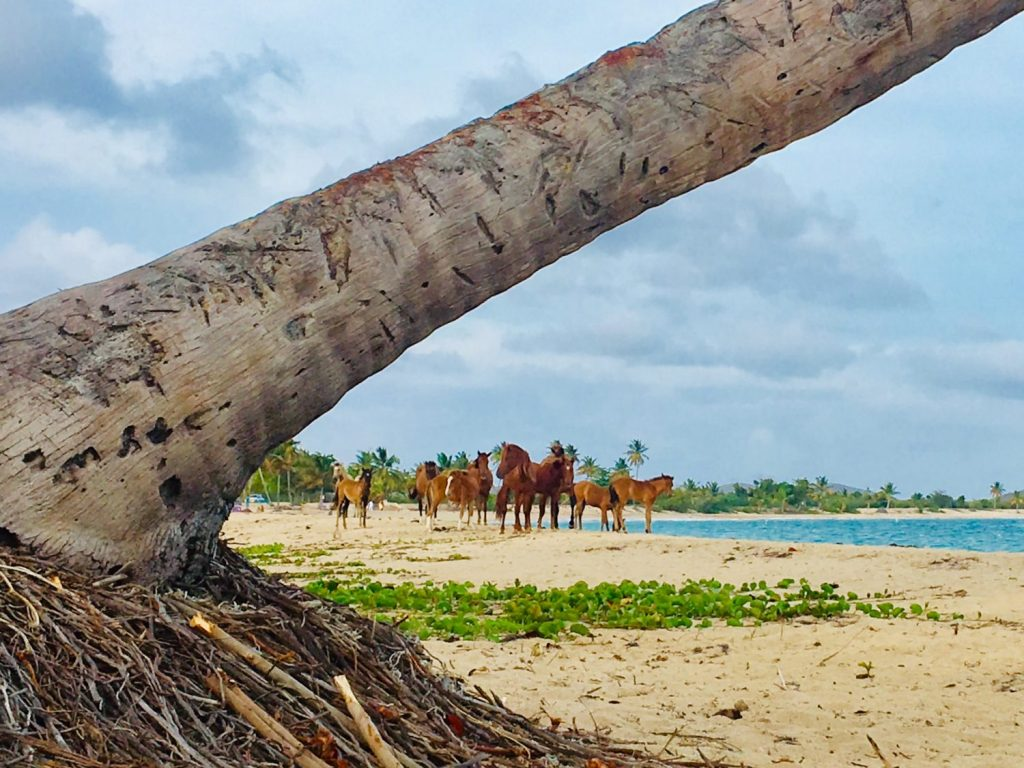 Beautiful herd of wild horses on an exotic beach